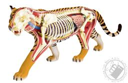 4D Vision Tiger Anatomy Model (28 Pieces for Ages 8 and Up) (Biology Model),4D Master