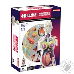 4D Human Anatomy Transparent Pregnancy Torso Model (41 Pieces for Ages 8 and Up),4D Master